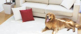Запаха собачьей мочи в квартире